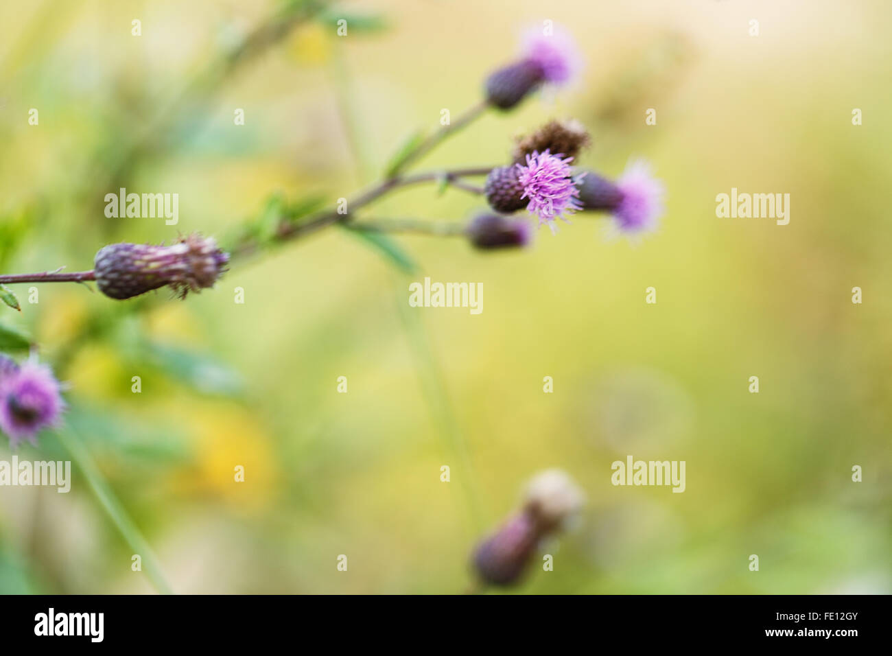 thorn plants outside day green background bokeh - Stock Image
