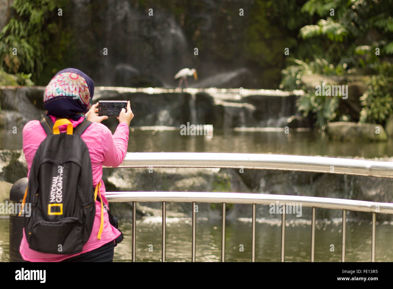 A Muslim tourist woman with Hijab and a national geography backpack walking in Bird Park in Kuala Lumpur, Malaysia - Stock Image