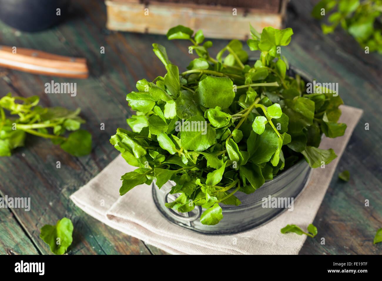 Raw Organic Green Watercress Ready to Use Stock Photo