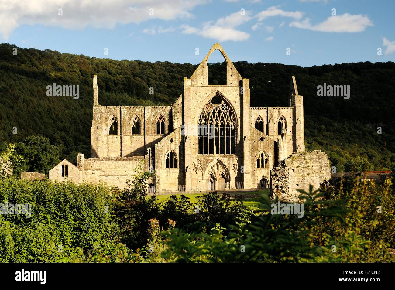 Tintern Abbey in the Wye Valley, Monmouthshire, Wales, UK. Cistercian Christian monastery founded 1131. Summer evening - Stock Image