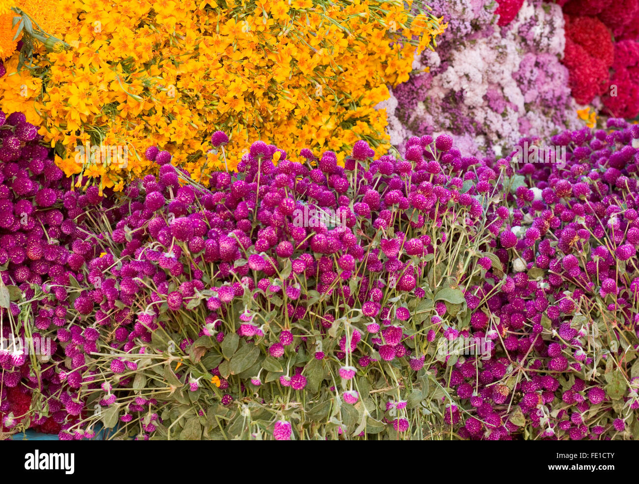Masses of clover and marigold flowers on sale for the Day of
