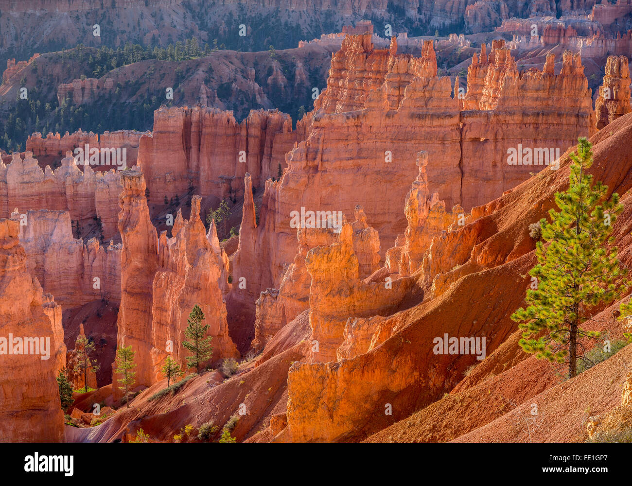Bryce Canyon National Park, UT: Morning sun in the Bryce Amphitheater backlighting the hoodoos and sandstone pinnacles - Stock Image