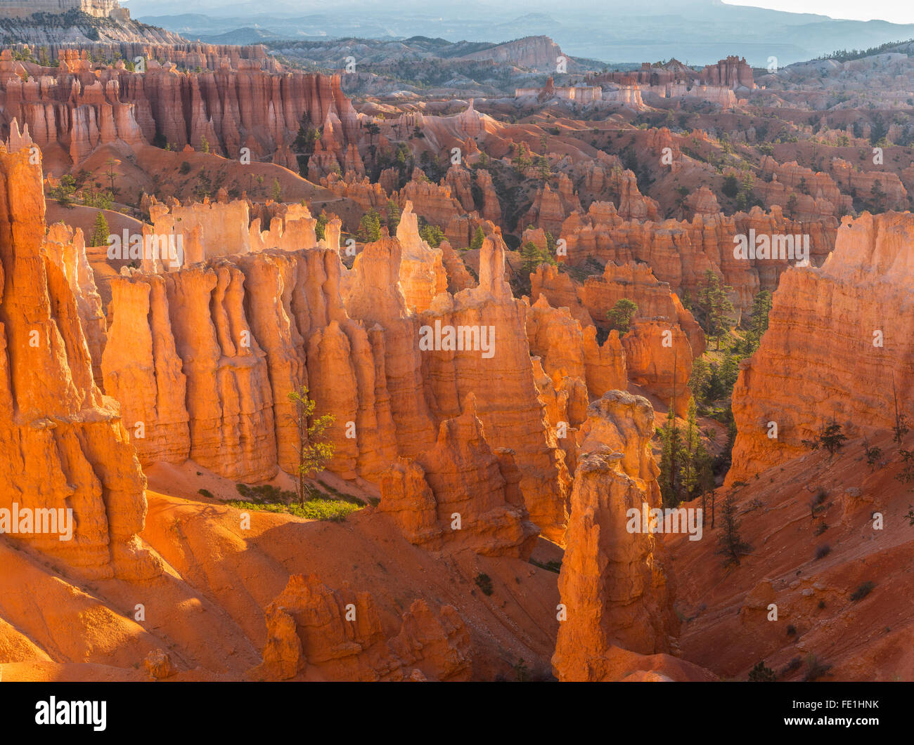 Bryce Canyon National Park, UT: Morning sun in the Bryce Ampitheater backlighting the hoodoos and sandstone pinnacles - Stock Image