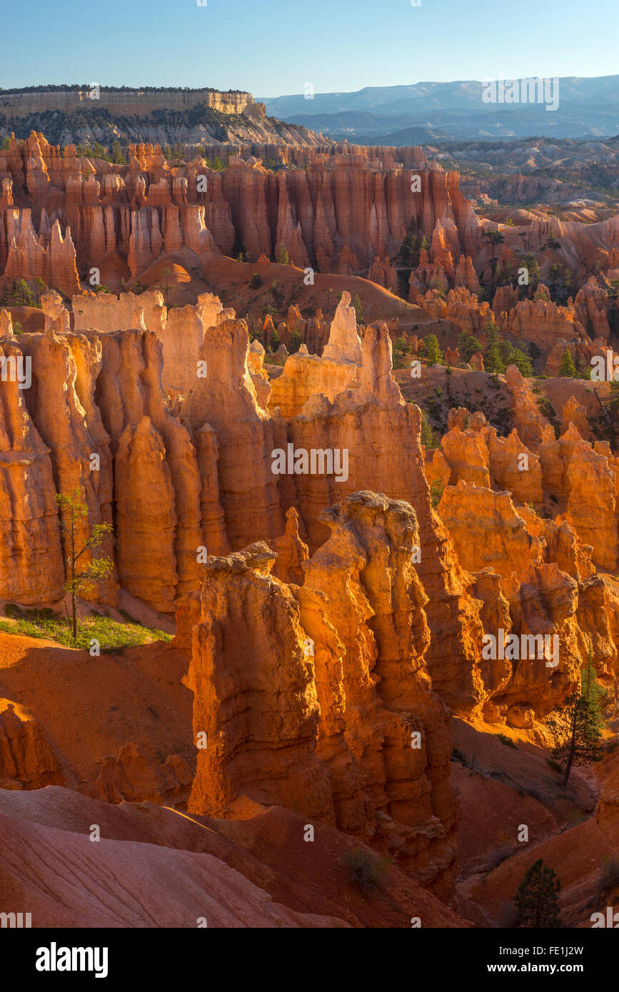 Bryce Canyon National Park, UT: Morning sun in the Bryce Ampitheater backlighting the hoodoos and sandstone pinnacles Stock Photo