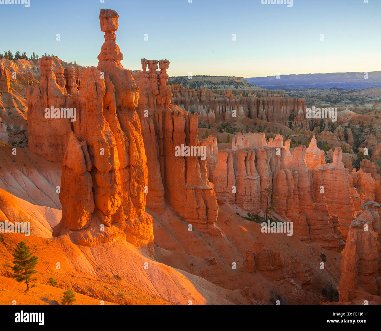 Bryce Canyon National Park, UT: Morning sun in the Bryce Ampitheater backlighting Thor's Hammer hoodoo and sandstone - Stock Image