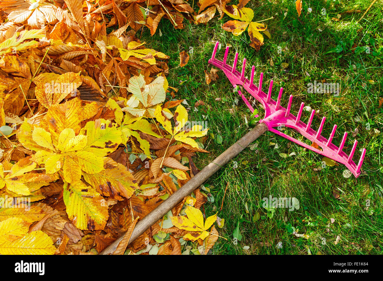Pile of fall leaves and rake on lawn Stock Photo
