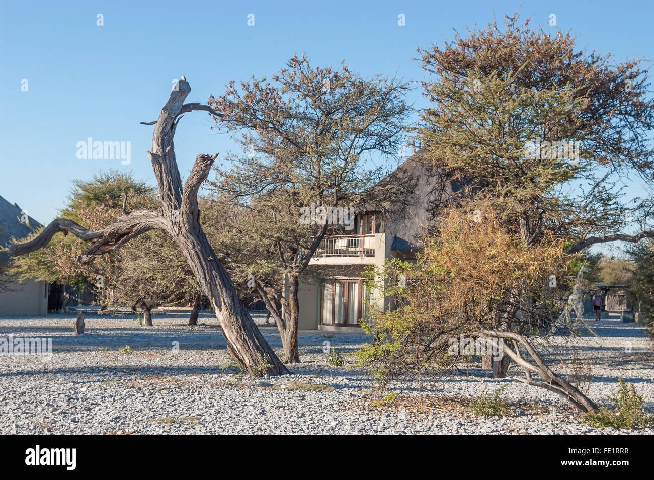 OKAUKEUJO, NAMIBIA - JUNE 12, 2015: Luxury chalets next to the waterhole in the Okaukeujo Rest Camp, Etosha National - Stock Image