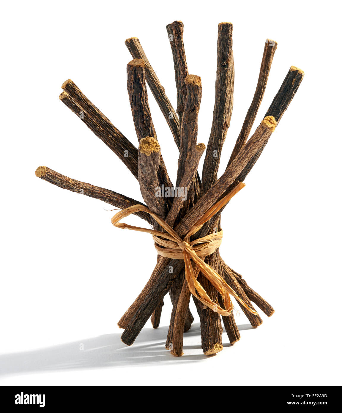 Bundle of dried licorice or liquorice roots tied with raffia for flavoring candy and desserts on a white background - Stock Image