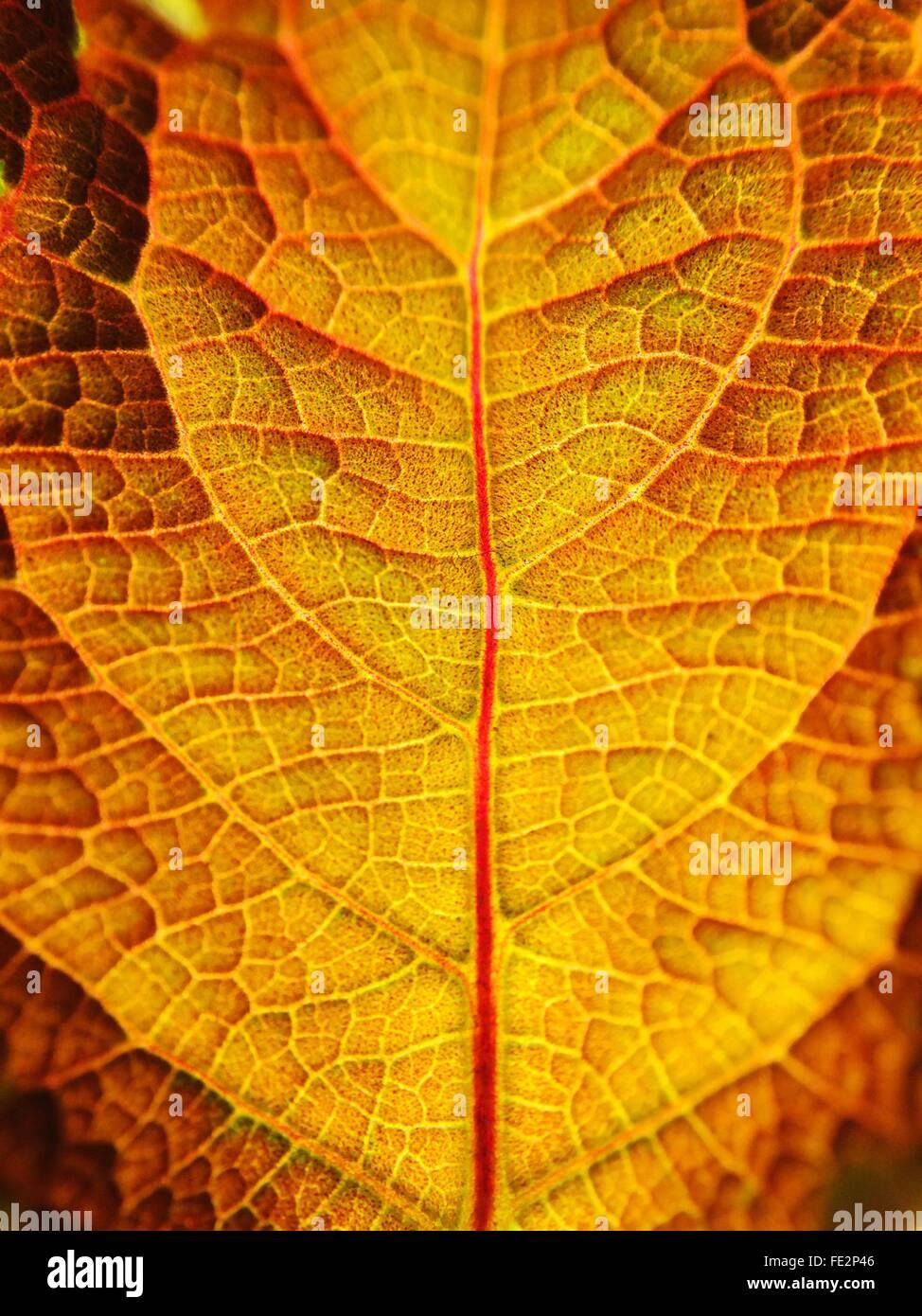Full Frame Shot Of Dry Leaf - Stock Image