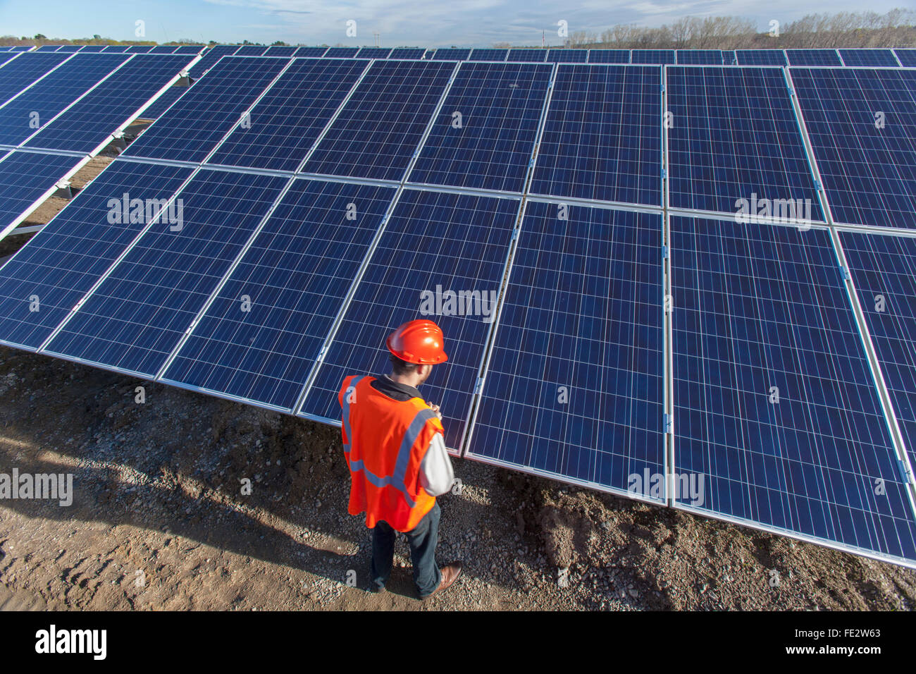 Power engineer looking at surface of panels at solar photovoltaic array - Stock Image