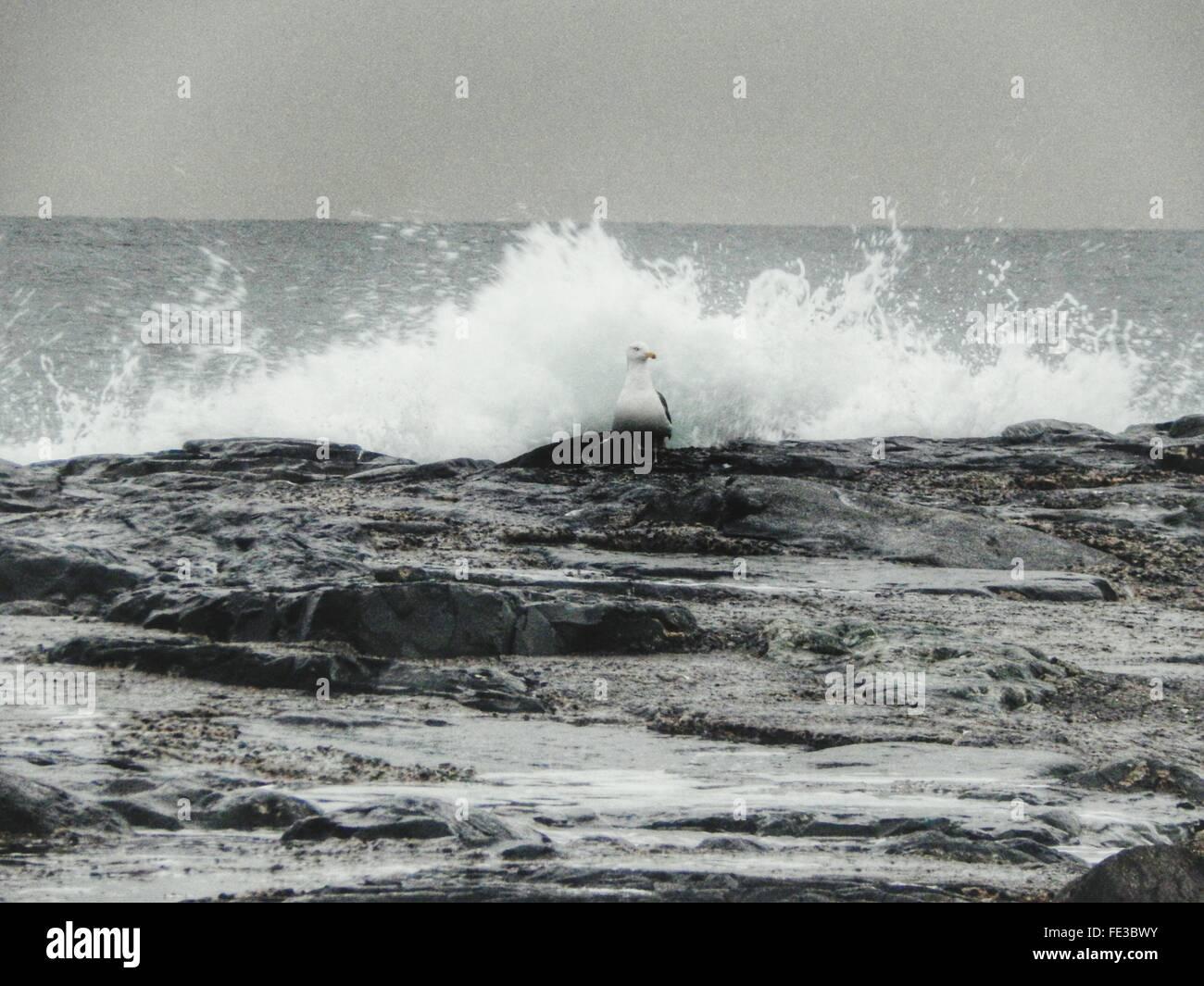 Majestic Waves Crashing Against Rocks - Stock Image