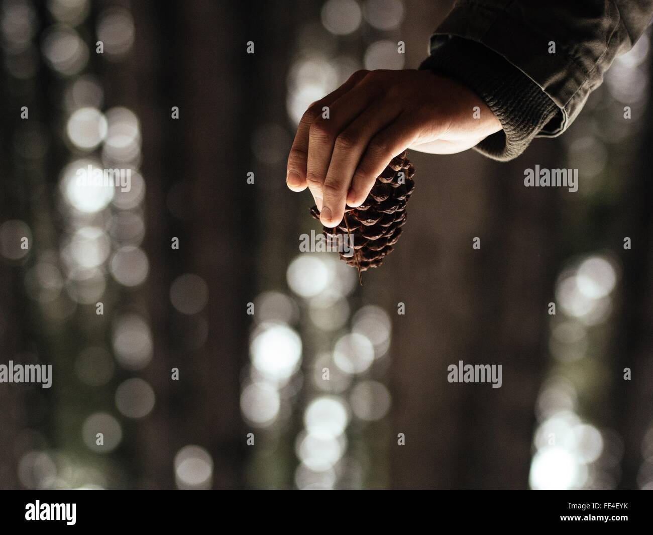 Cropped Image Of Person Holding Pine Cone In Forest - Stock Image