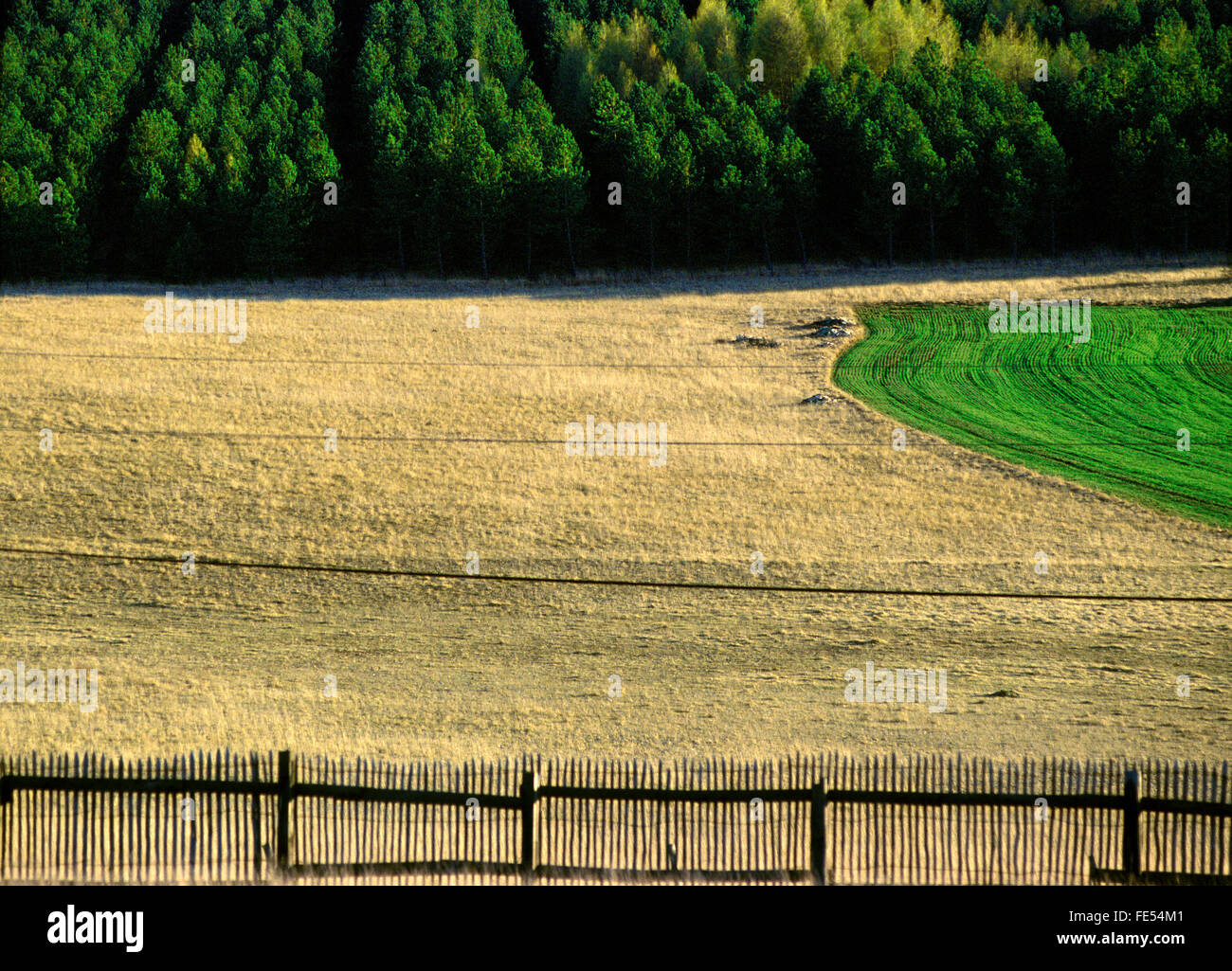 field, acre, land, green, brown, dry, fertile, graphic, grafically, diagramed, separated, divided, split, cleft, - Stock Image
