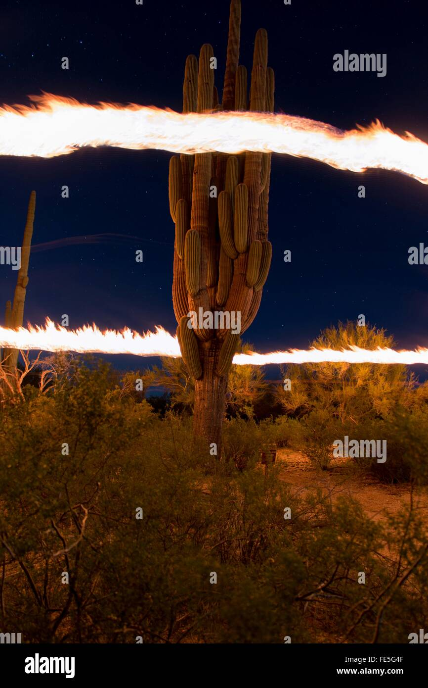Ring Of Fire Around Cactus Plant - Stock Image