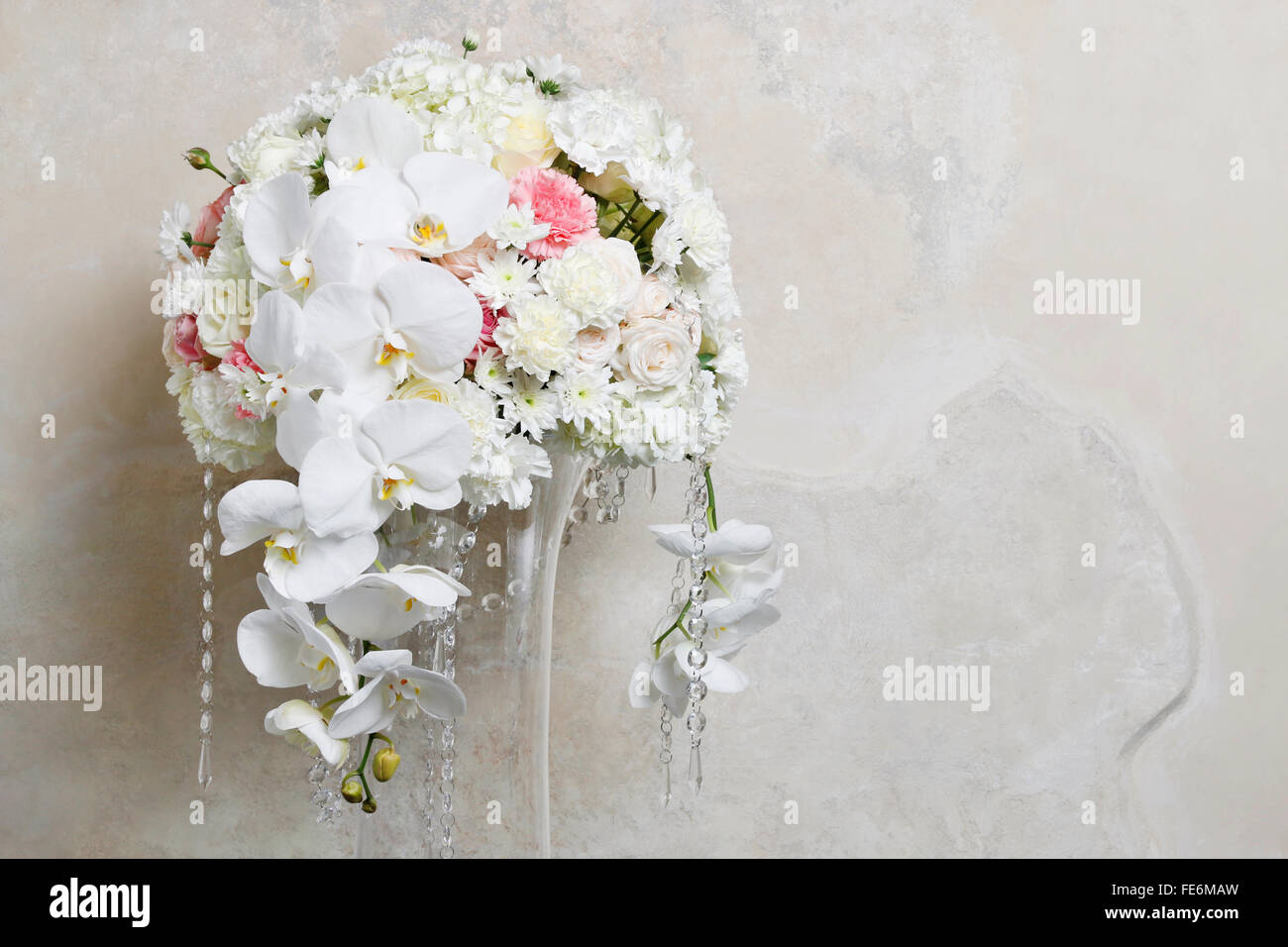 White Carnation Background Wallpaper Stock Photos White Carnation