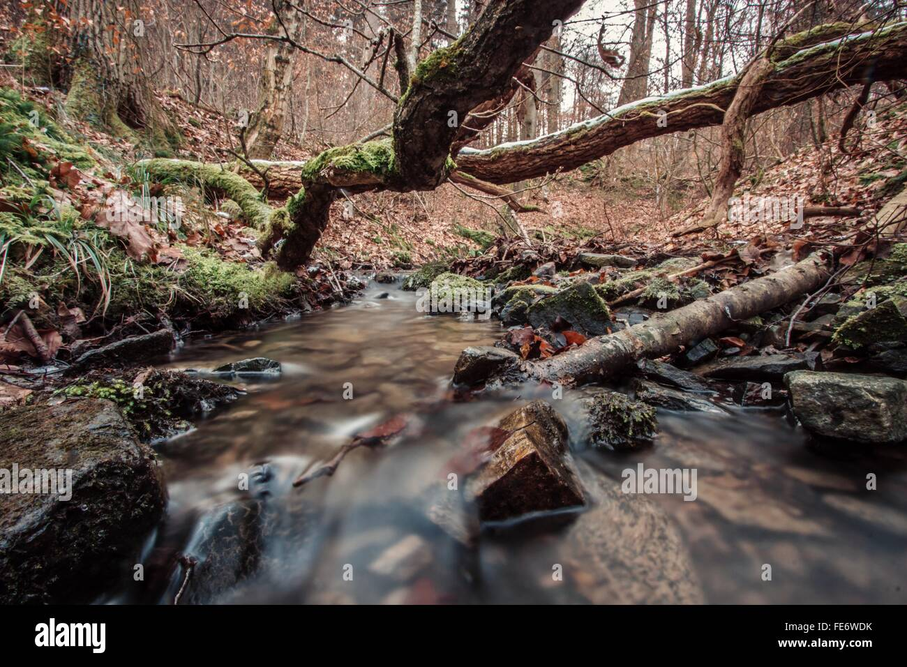 Stream And Fallen Trees In Forest - Stock Image