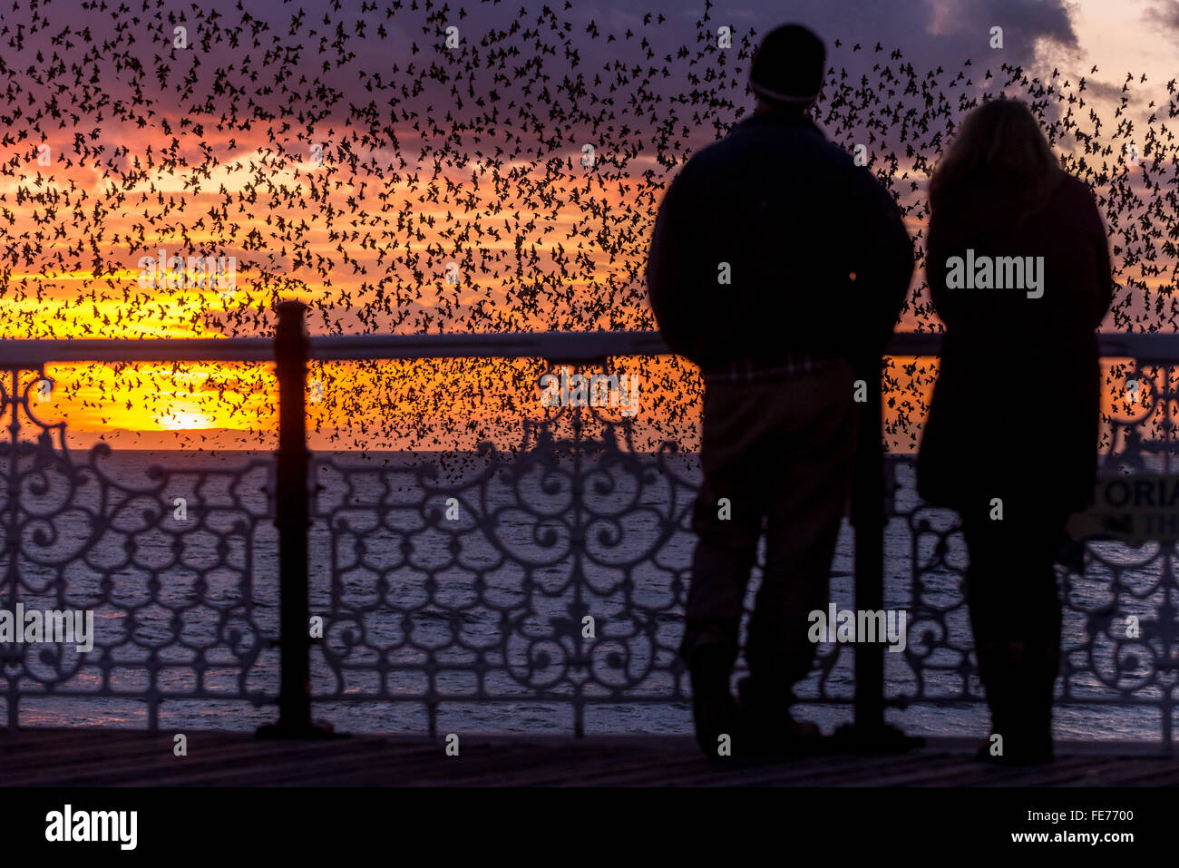 People watching the nightly murmuration of starlings at sunset from Palace Pier, Brighton. - Stock Image