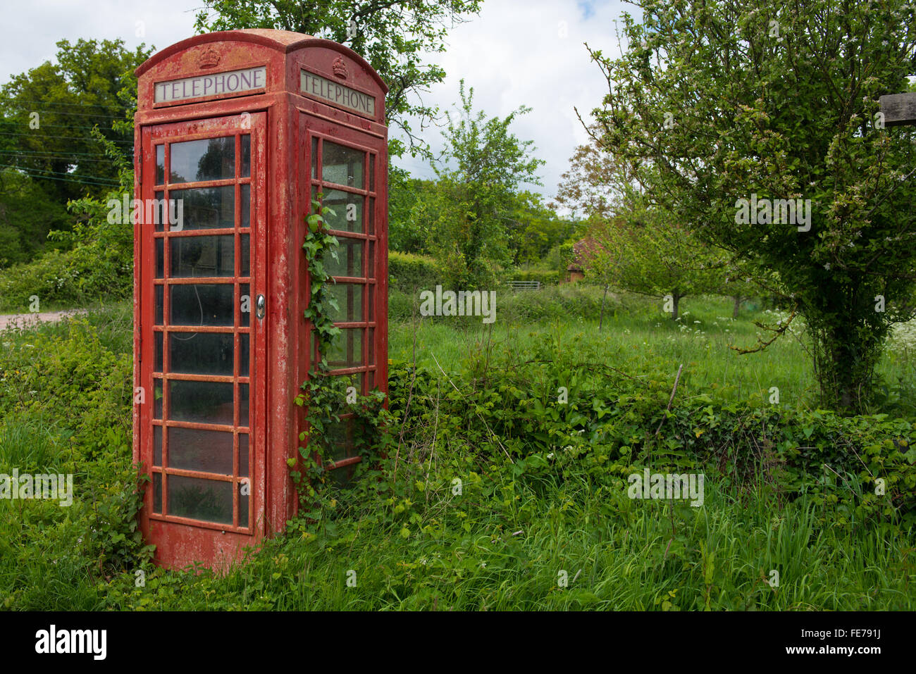 Traditional red British telephone kiosk being overgrown by ivy - Stock Image