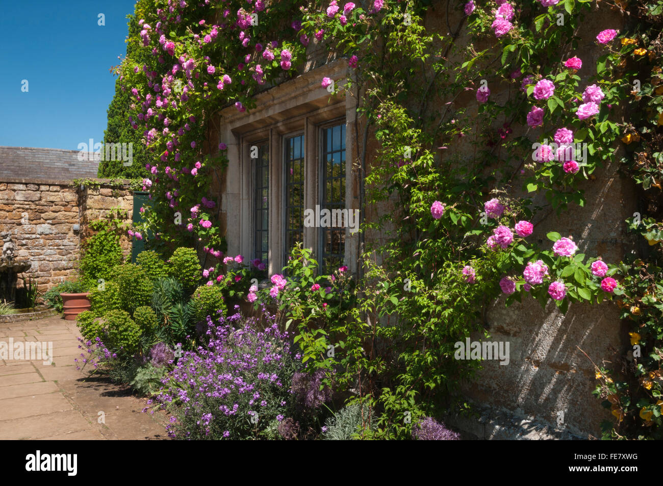 Summer flowers and pink roses framing a mullion window on the terrace of Coton Manor in Northamptonshire, England - Stock Image