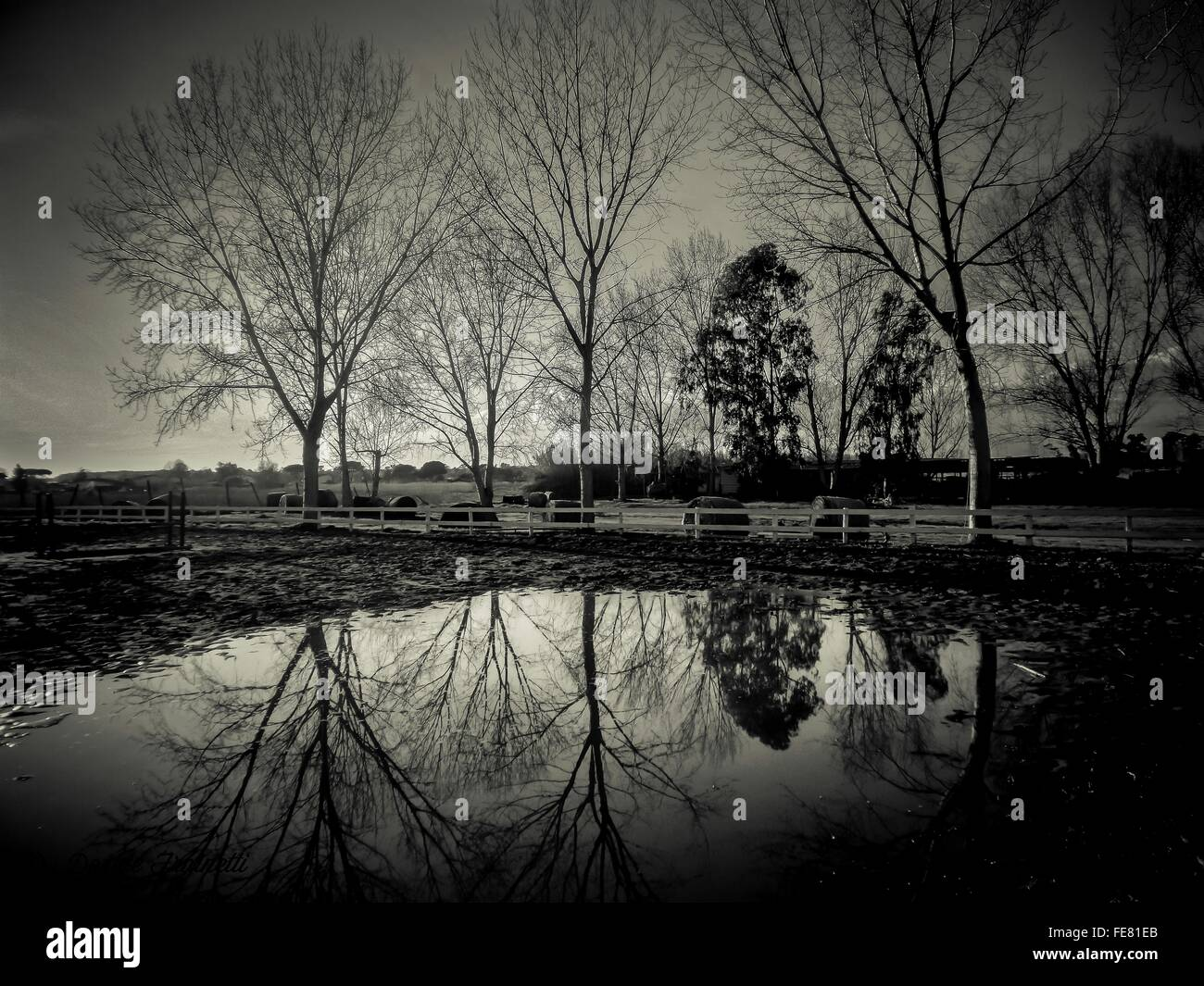 Reflection Of Trees In Puddle Near Farm Fence - Stock Image