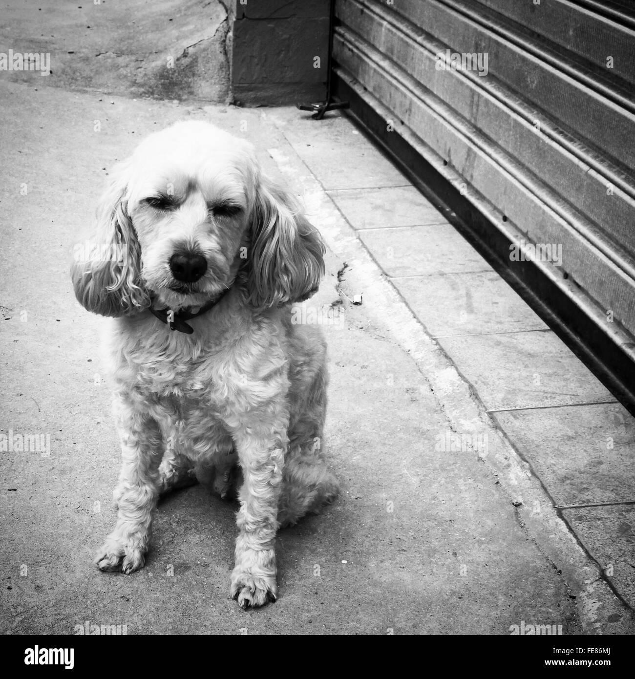 Close-Up Of Dog Sitting On Street - Stock Image