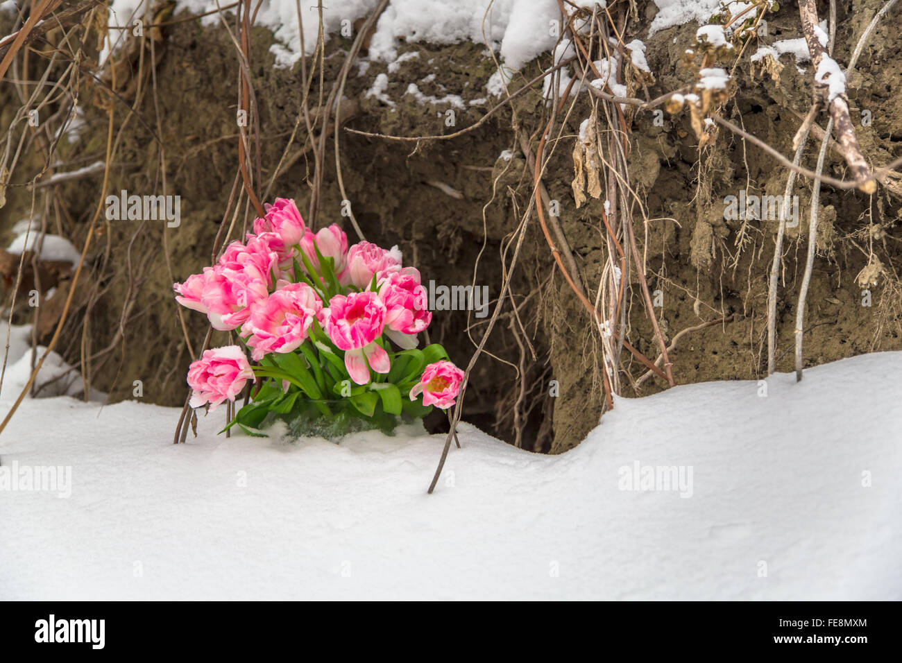 Fresh flowers in a vase standing in the snow on a grunge background - Stock Image