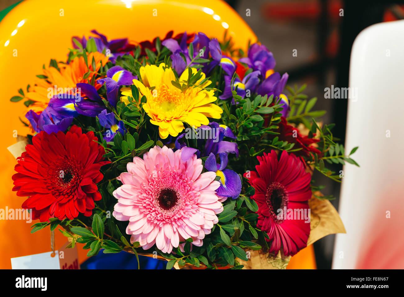 Flowers bouquet of gerbera, iris, pistacia on coloroful background - Stock Image