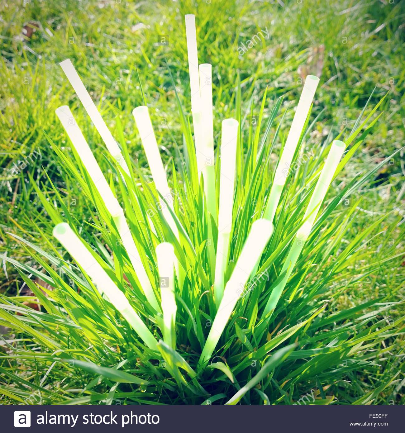 Close-Up Of Green Blade Of Grass - Stock Image