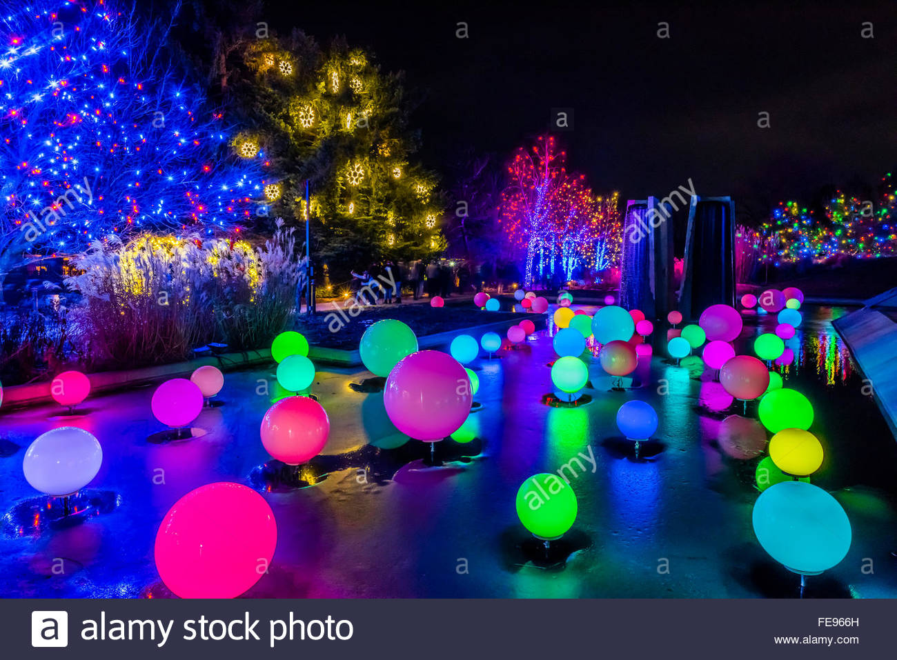 Charming Blossoms Of Light , One Million Lights Illuminating The Denver Botanic  Gardens During The Holiday Season, Denver, Colorado USA. Images