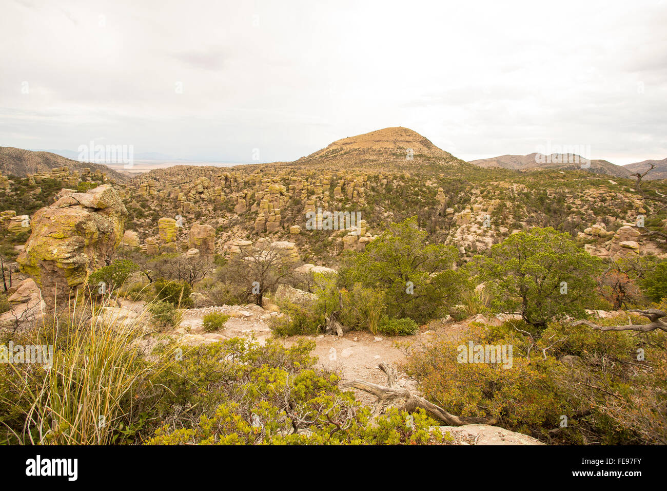 Organ Pipe cactus national monument in southern arizona - Stock Image