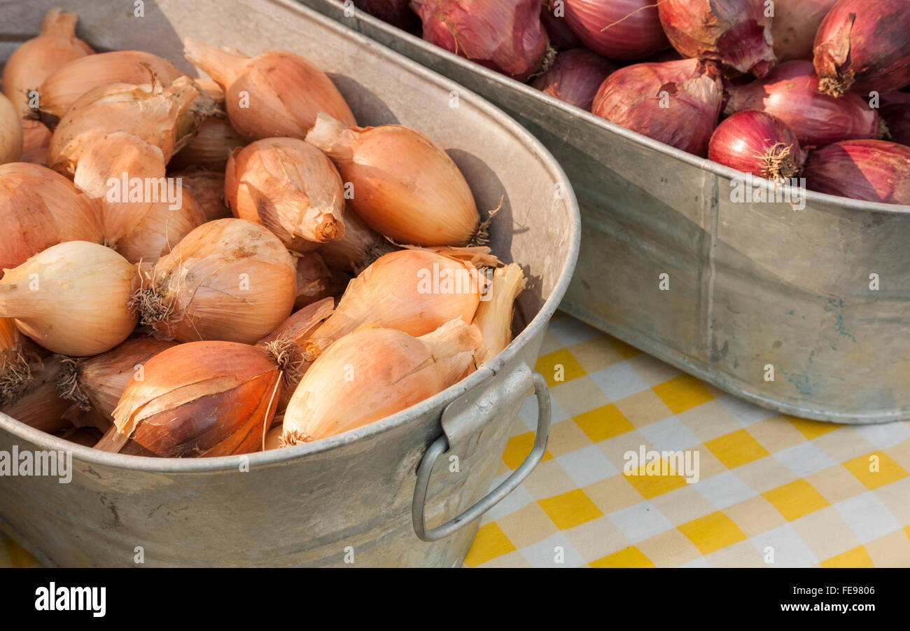 Red and yellow onions in galvanized metal buckets at farmers market. Fresh, organic, local produce for sale. - Stock Image
