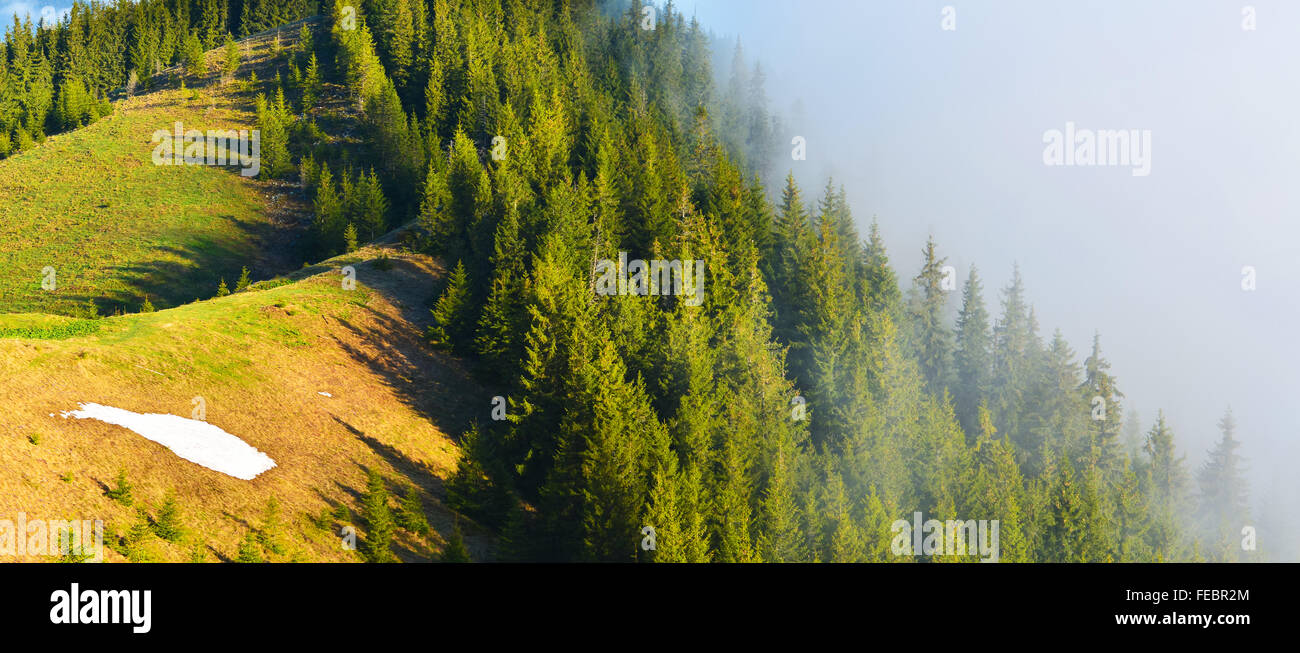 Mountain conifer forest in misty highland - Stock Image
