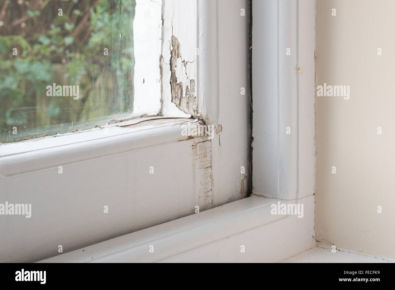 Damage to wooden single glazed window frame caused by condensation and rain - Stock Image