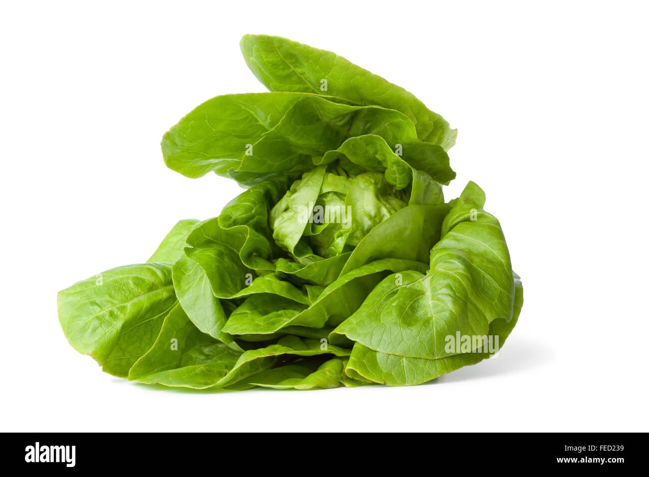 Fresh green little gem lettuce on white background - Stock Image