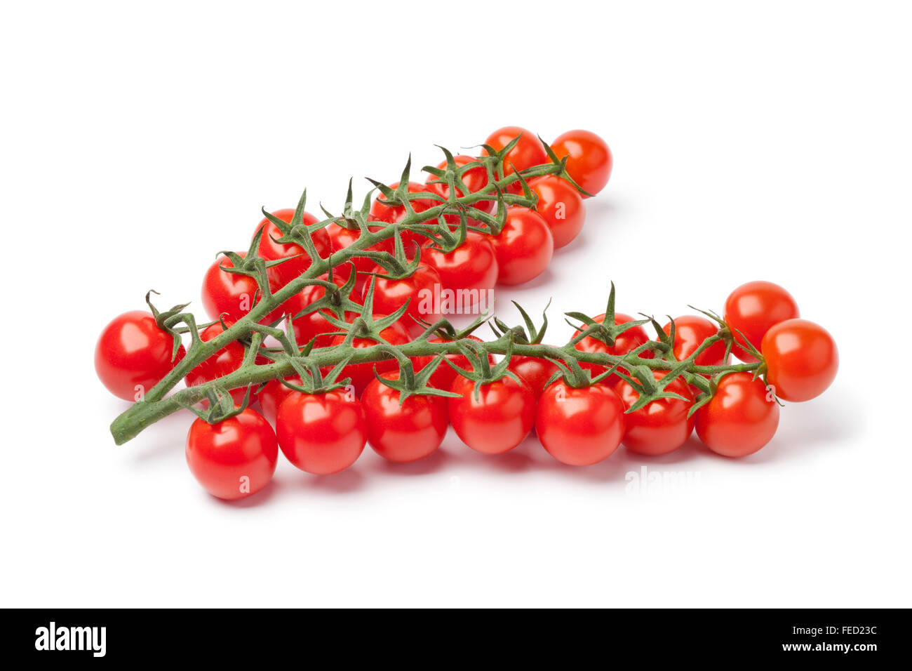 Small fresh cherry tomatoes on a vine on white background - Stock Image