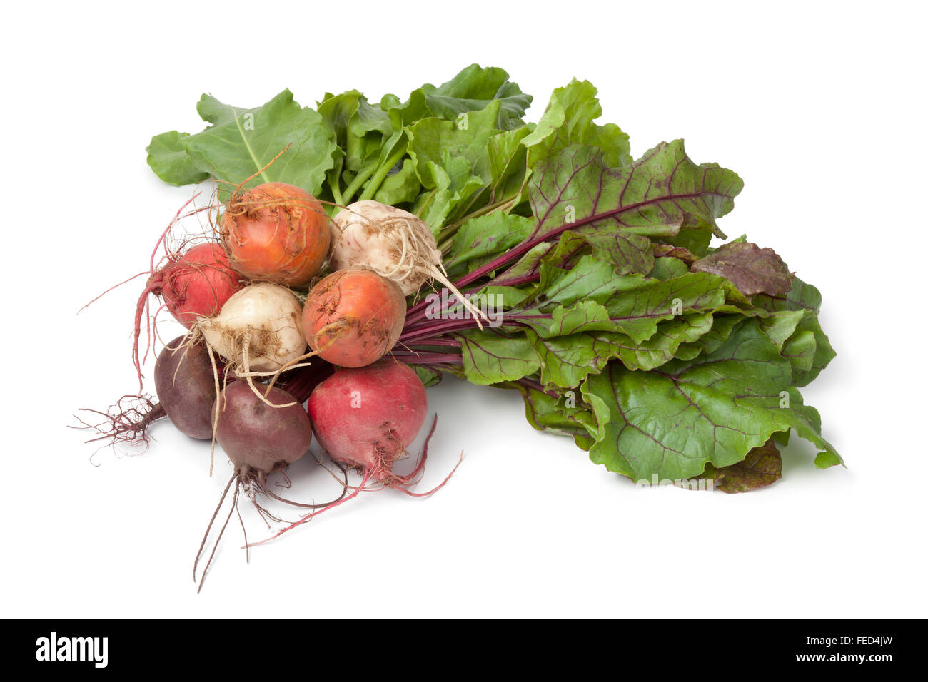 Bunch of fresh mixed color heirloom beets on white background Stock Photo
