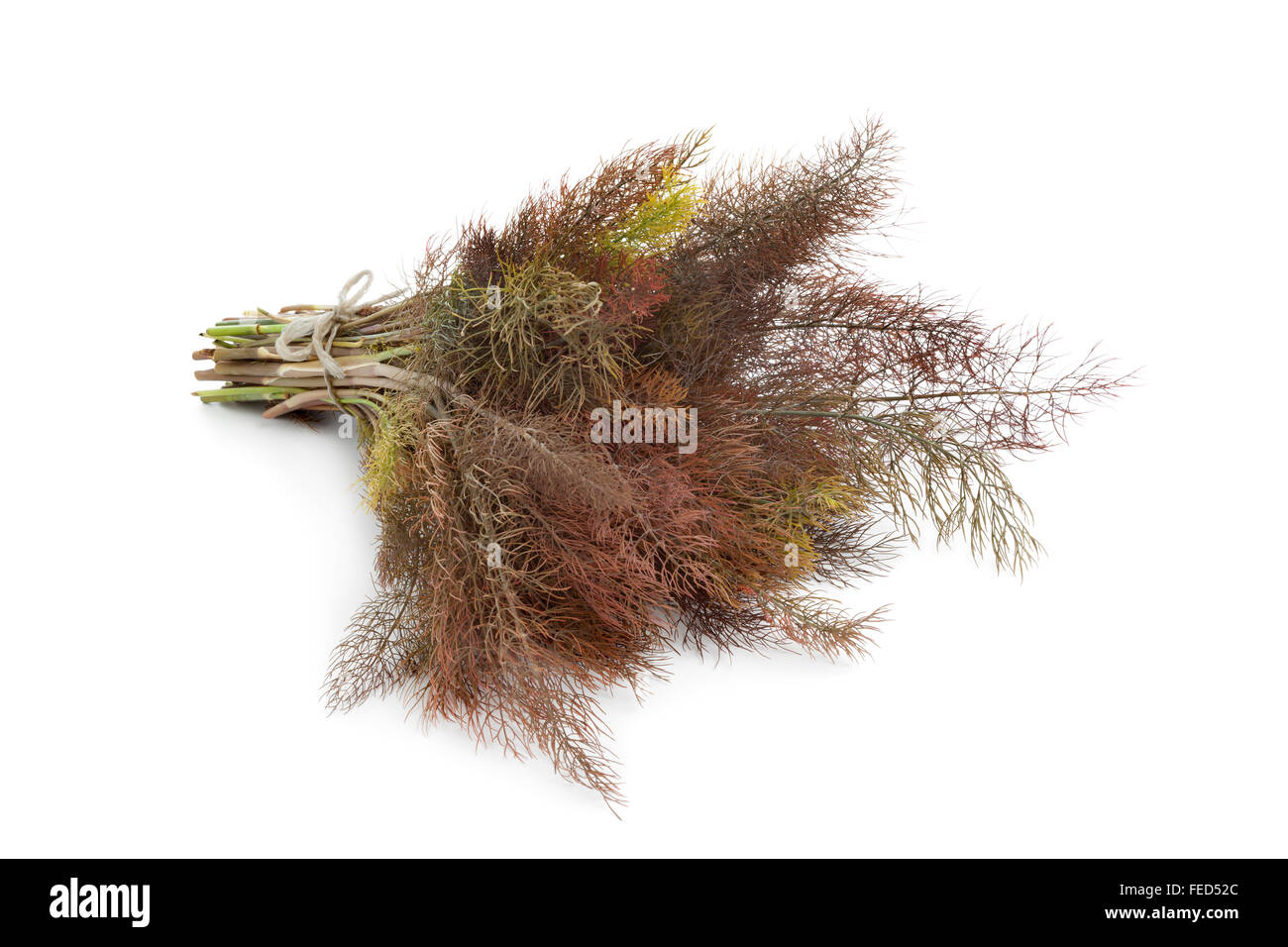 Bunch of fresh bronze fennel on white background - Stock Image