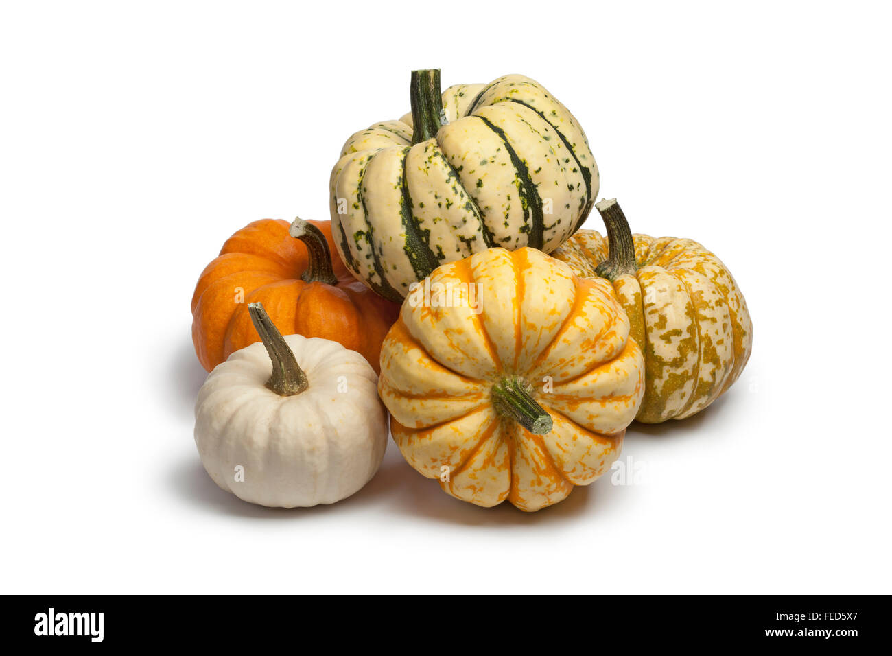 Variaty of baby pumpkins on white background - Stock Image