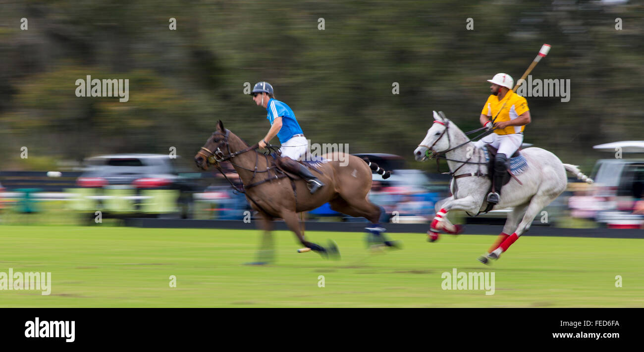 Polo match at Sarasota Polo Club at Lakewood Ranch in Sarasota Florida - Stock Image