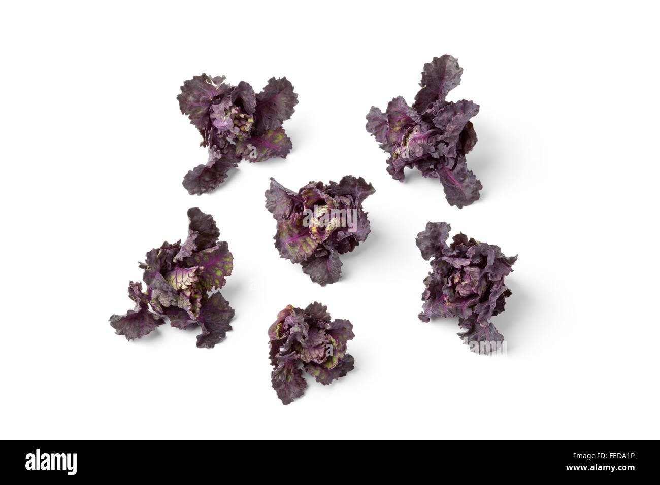 Fresh red flower sprouts on white background - Stock Image