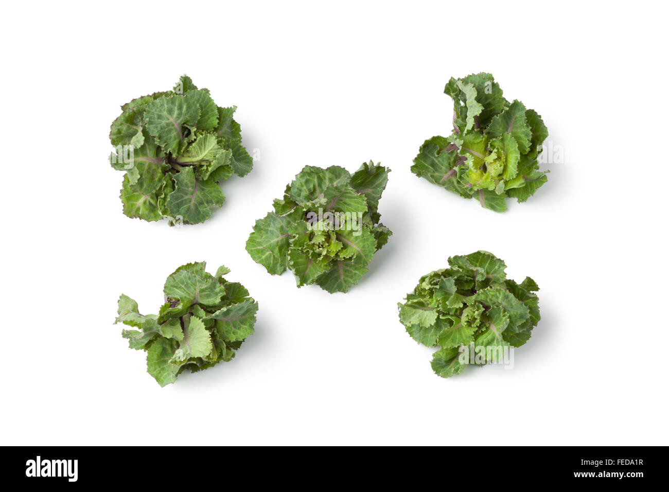 Fresh green flower sprouts on white background - Stock Image