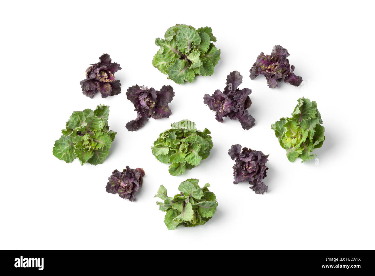 Fresh red and green flower sprouts on white background - Stock Image