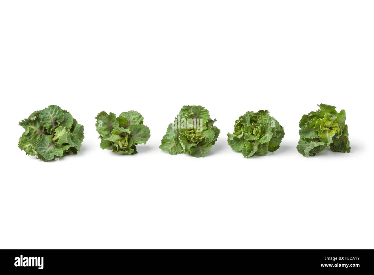 Row of fresh green flower sprouts on white background - Stock Image