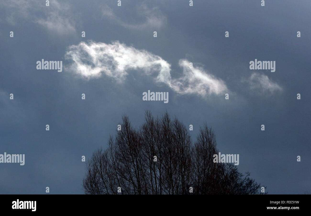 A cloud is lit by the sun above treetops in south west London, Britain. Photograph by John Voos - Stock Image