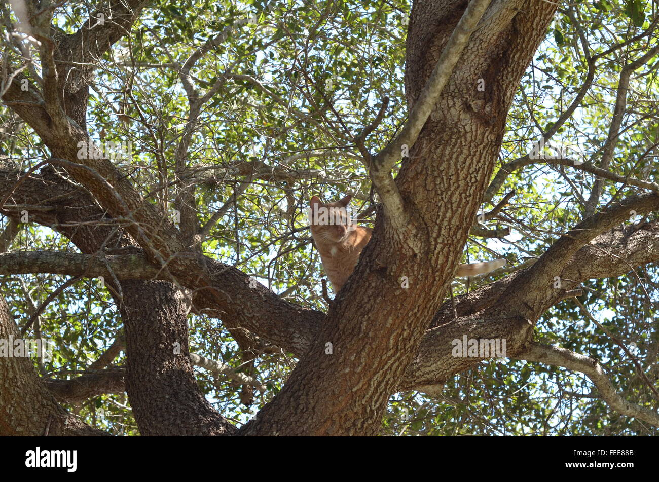 tree, orange tabby, found, hunted, food, healthy, curious, attention, nature, blue skies, oak tree, question, chill, - Stock Image