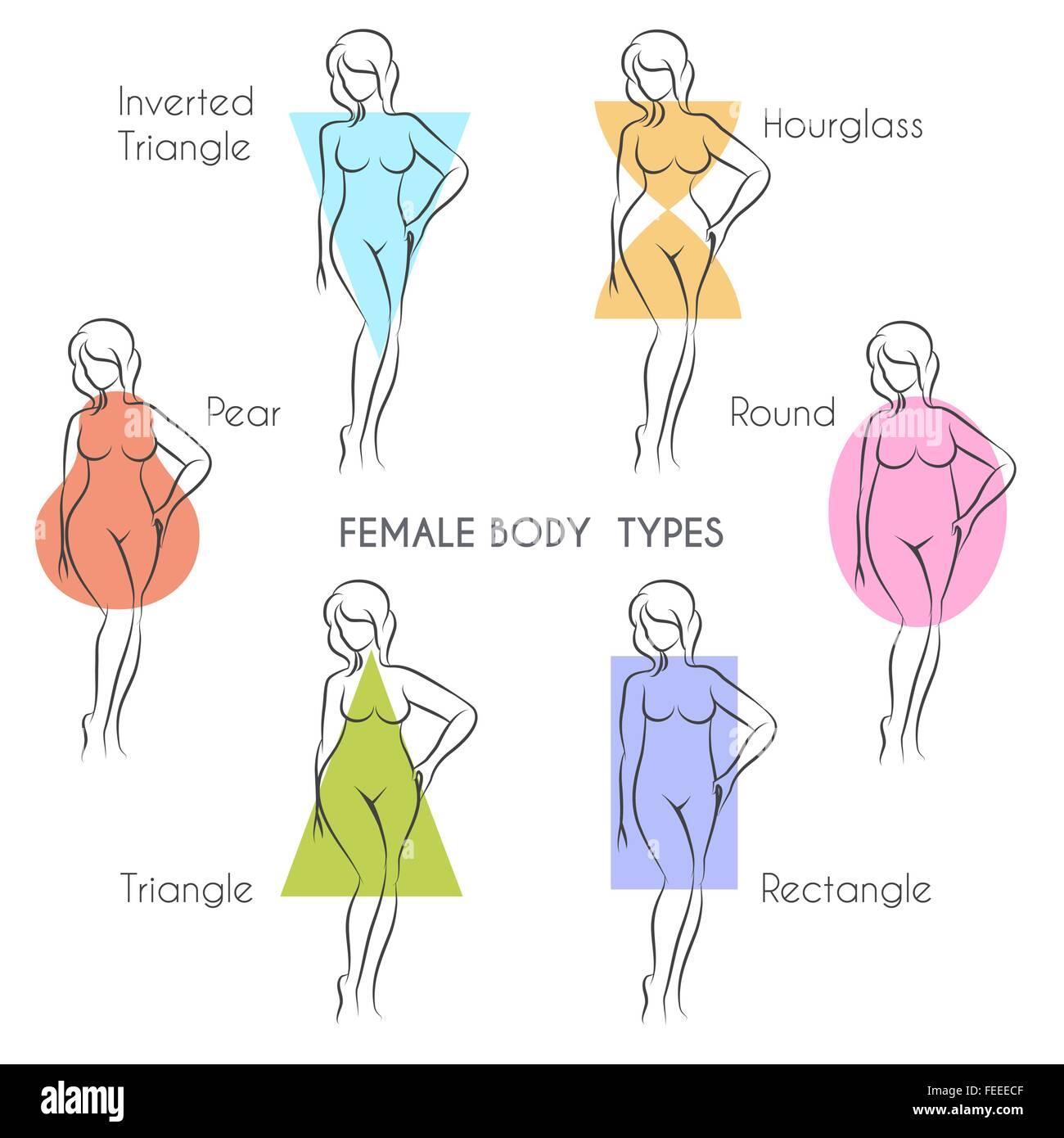 Female body types anatomy. Main woman figure shape, free font used ...