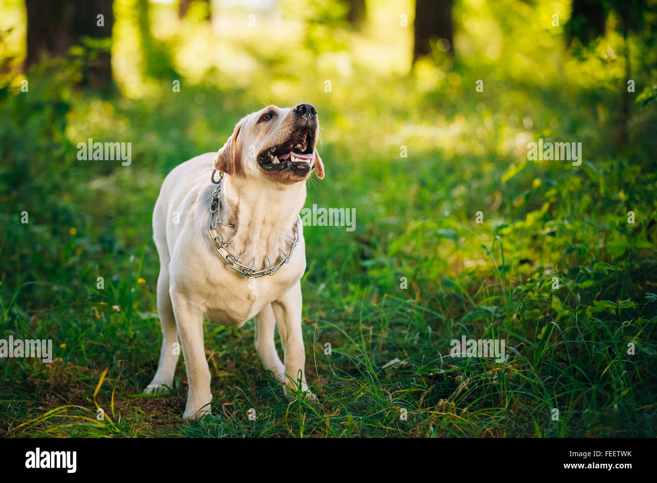 Dog Barking Stock Photos Dog Barking Stock Images Alamy