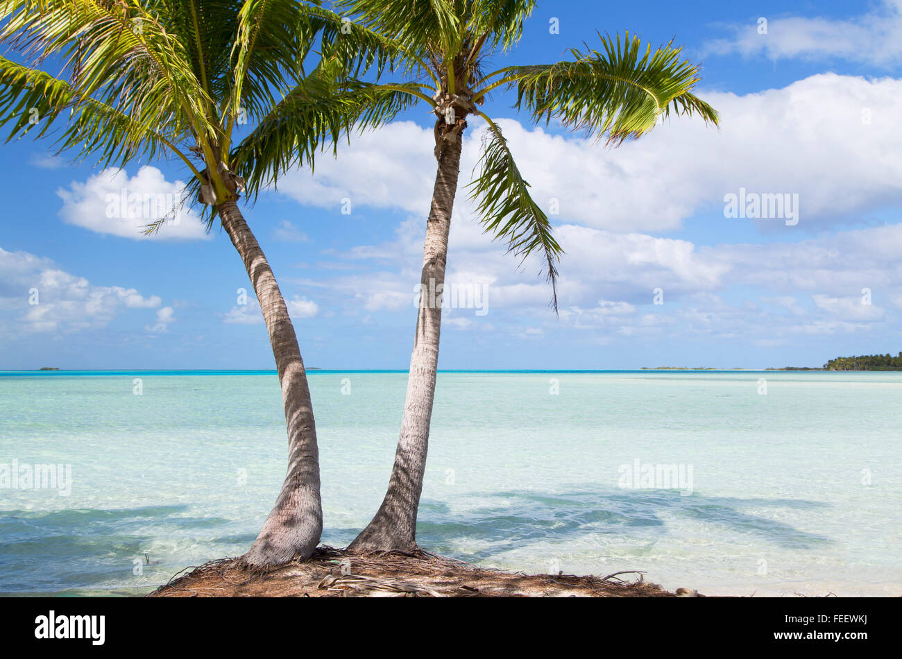 Palm trees at Blue Lagoon, Fakarava, Tuamotu Islands, French Polynesia - Stock Image