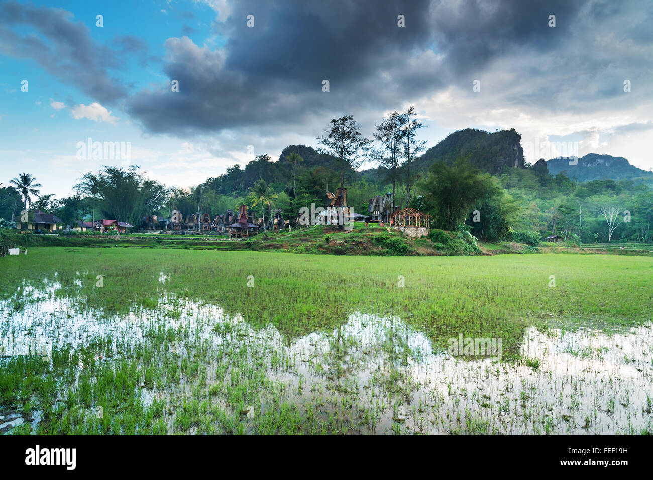 Tongkonan traditional village Kete Kesu. Tana Toraja, Sulawesi. Indonesia - Stock Image