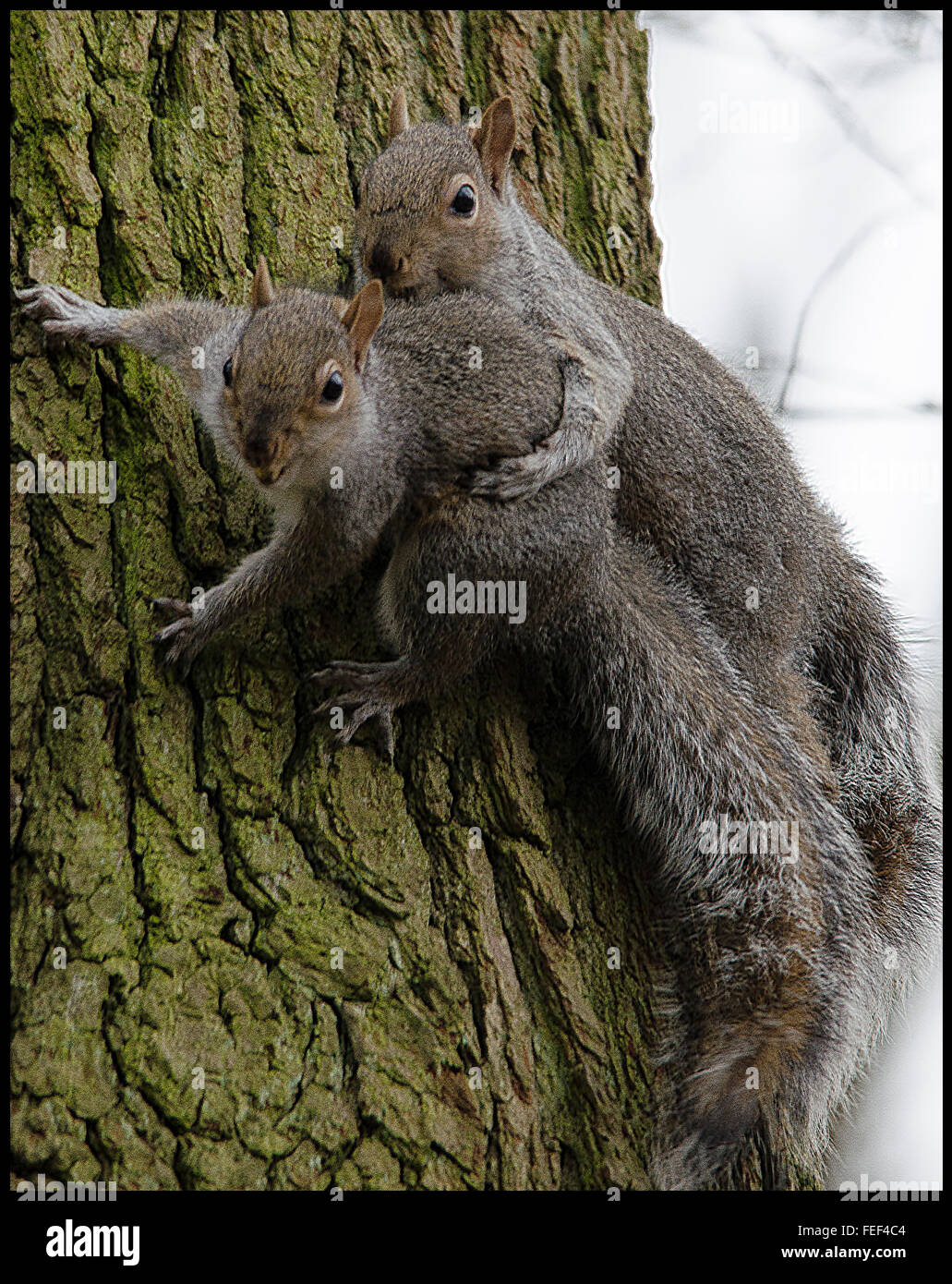 how to kill squirrels naturally